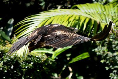 Currumbin Wildlife Sanctuary 29-4-09
