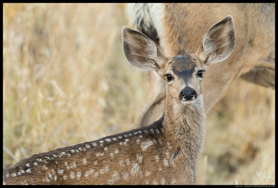 One of the two fawns that came by with mom.