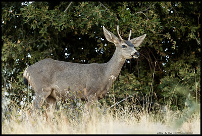 Spike now, but if he makes it through the next couple of years this is going to be a good sized buck.