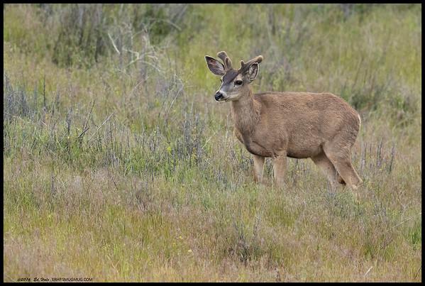 Just a buck watching a doe graze further down the hillside.