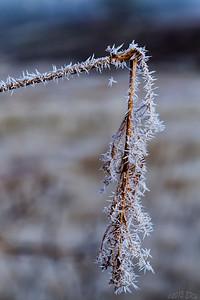 Heavy frost.
