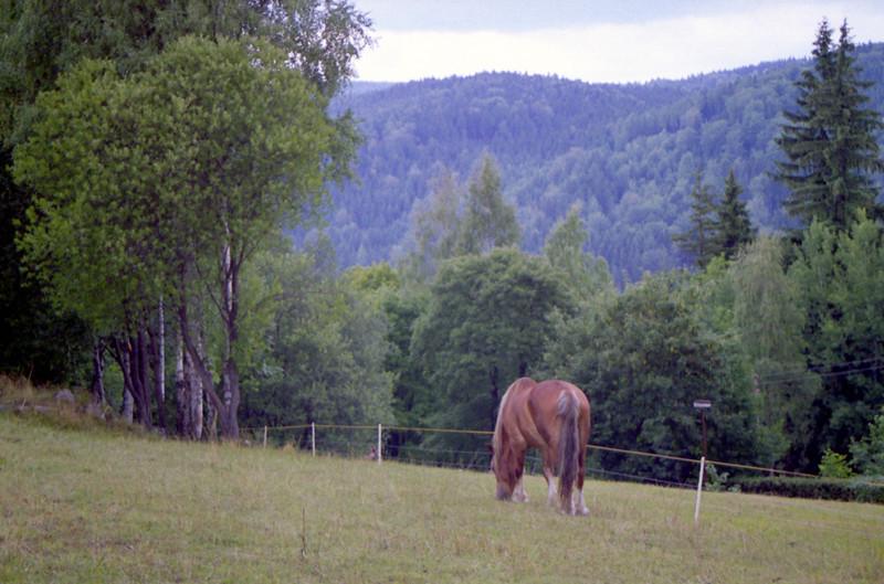 osamělý kůň (nad Josefovým dolem)