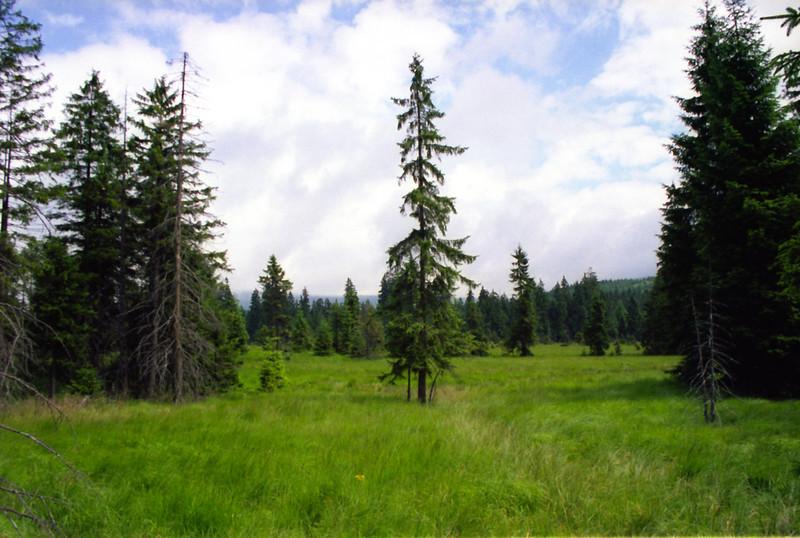 rašeliniště na Nové louce