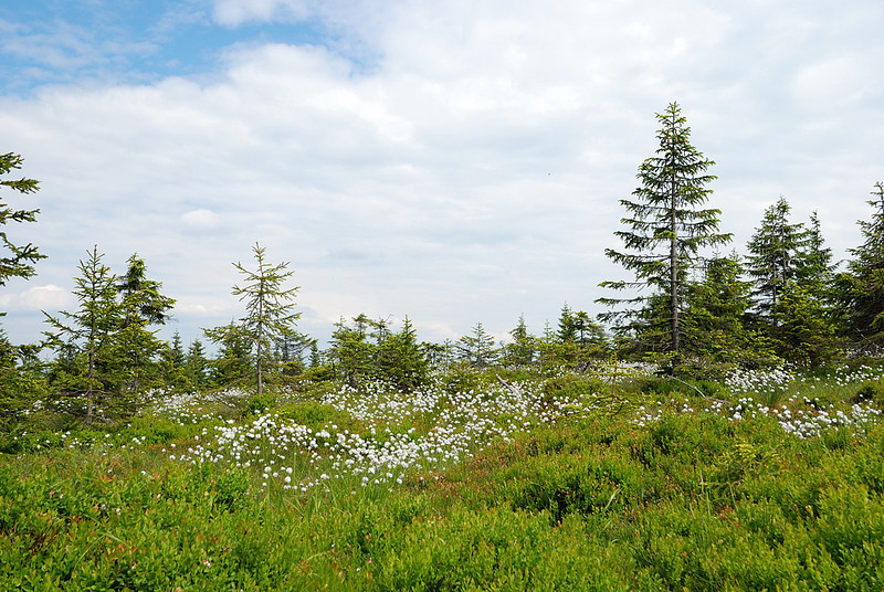 "Taken at Latitude\Longitude:50.670362\15.757443 Near Velká Úpa Královéhradecký Kraj Czech Republic <a href=""http:\\www.geonames.org\maps\google_50.670362_15.757443.html""> (Map link)"