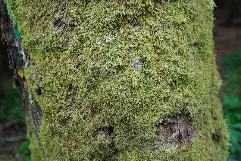 "Taken at Latitude\Longitude:50.703429\15.768590 Near Velká Úpa Královéhradecký Kraj Czech Republic <a href=""http:\\www.geonames.org\maps\google_50.703429_15.768590.html""> (Map link)"