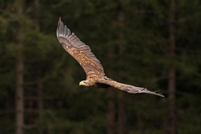 Czech Republic....Birds of Prey