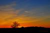 Tree of Dawn 2