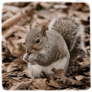 Thanksgiving Squirrel 2014