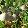 Fungus gathering