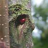 Dormant ladybird