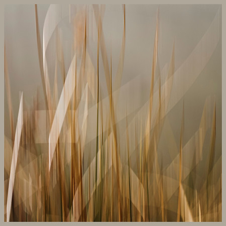 Winter Grass, Blurred Day 42 of 365 February 11, 2013