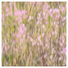 Pink Wildflowers, Blurred<br /> July 22, 2013
