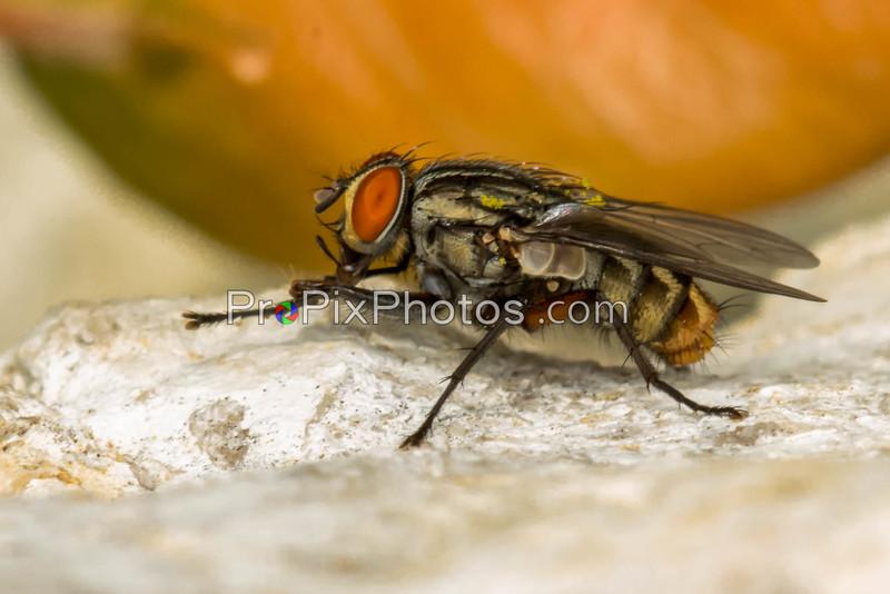 Dallas Arboretum - Macro - Flys