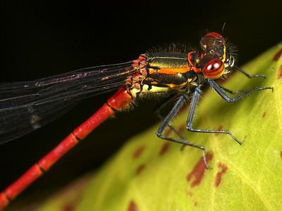 Damsell flies