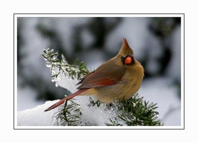 birds_DSC3766