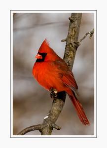 birds_DSC3669