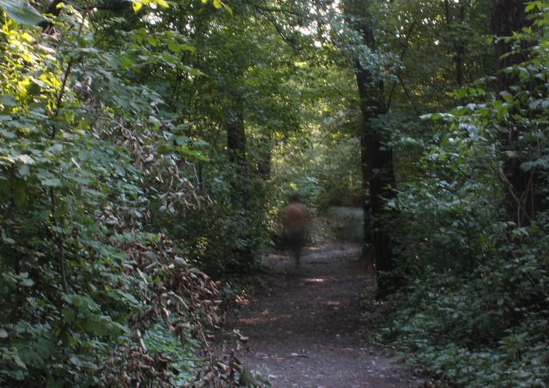 Dabbled paths