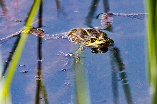 Wildlife on the Danube Island
