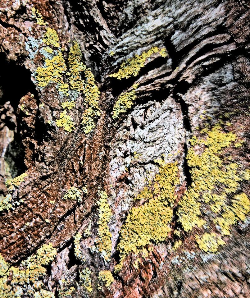 colourful wood
