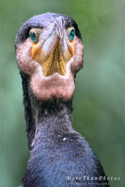 """"""".. and your point is?..."""" 2013-05-19  A really bored Cormorant in the zoo in Vienna - Tiergarten Schönbrunn.  Enjoy your Sunday."""