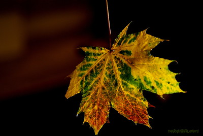 Dead Leafes (3)
