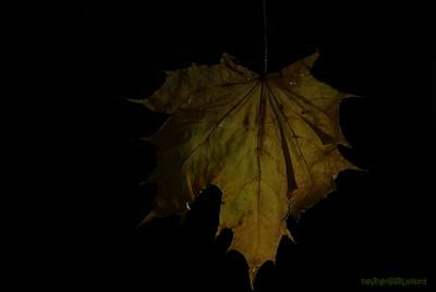 Dead Leafes (23)