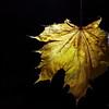 Dead Leafes (20)