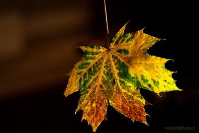 Dead Leafes (2)