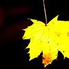 Dead Leafes (5)