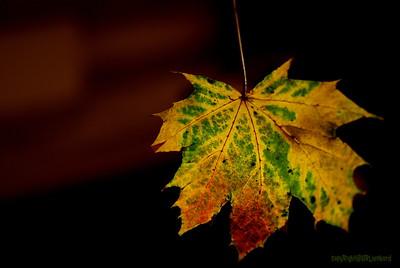 Dead Leafes (4)