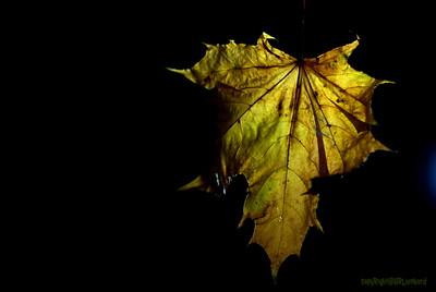 Dead Leafes (7)
