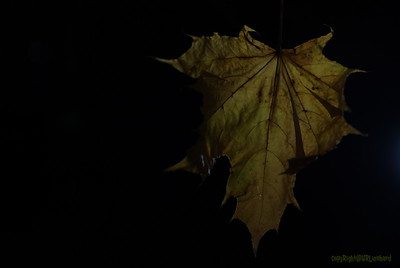 Dead Leafes (8)