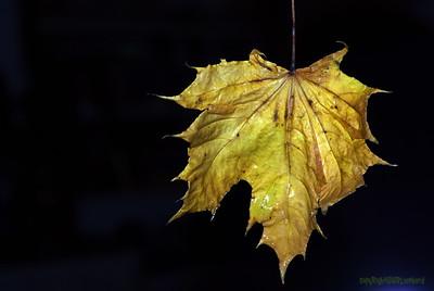 Dead Leafes (16)