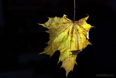 Dead Leafes (13)