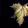 Dead Leafes (9)