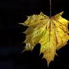 Dead Leafes (14)