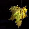 Dead Leafes (12)