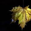 Dead Leafes (18)