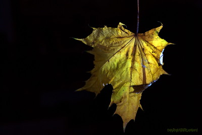 Dead Leafes (11)