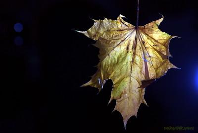 Dead Leafes (10)