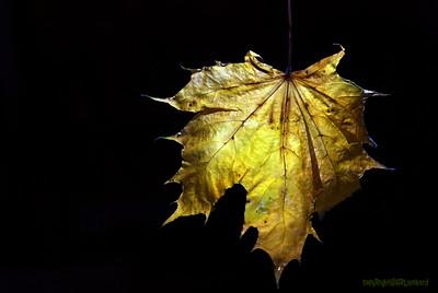 Dead Leafes (21)