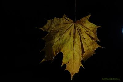 Dead Leafes (24)
