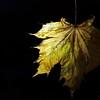 Dead Leafes (19)