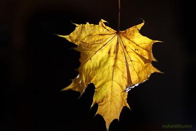 Dead Leafes (6)