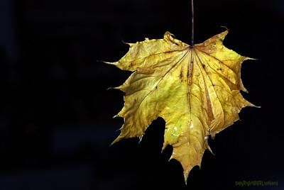 Dead Leafes (15)
