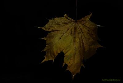 Dead Leafes (22)