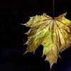 Dead Leafes (17)