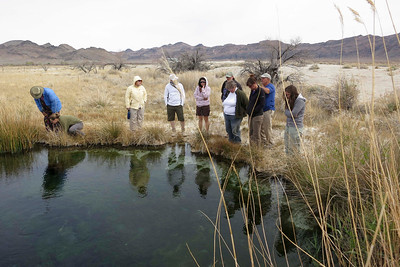 Jackrabbit Spring, Ash Meadows Preserve.  I absolutely love all the little crystal-clear springs that well up all over Ash Meadows.  Pretty much each has its own species of pupfish, speciated since the late-Pleistocene integrated system of lakes and rivers receded.