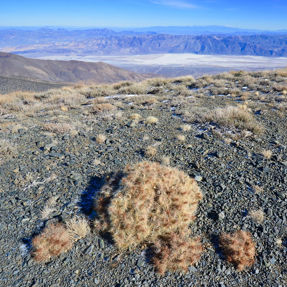 Cactus in foreground, Badwater in background