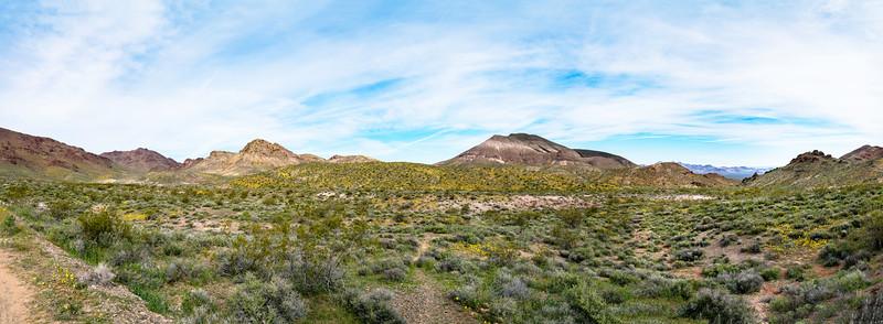 Death Valley Superbloom Panorama